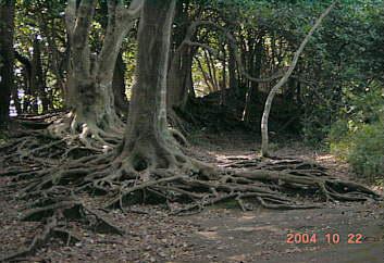 北鎌倉 2004.10.22