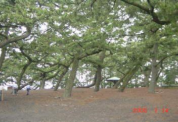 5、三保の松原は平安の昔から白砂青松にそそりたつ富士の景勝地〜(作庭)浜州で塩焼きの煙をたちこめた