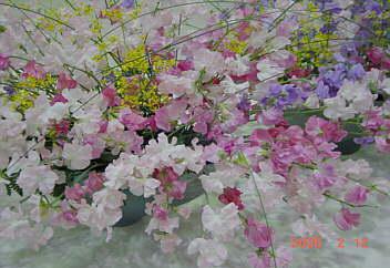 花と緑の銀行 富山テクノホ−ル