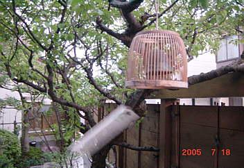 3、我が家の庭先に風鈴の音!
